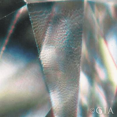 Diamond lizard skin magnified